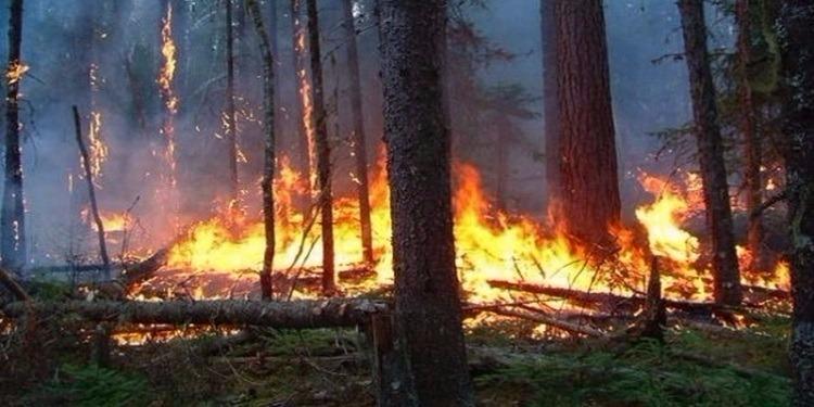 قابس: إندلاع حريق بإحدى الغابات