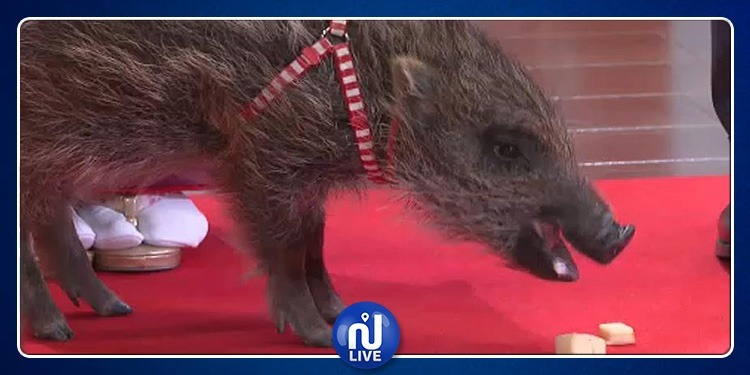 تقويم غريب.. اليابان تنتقل من 'عام الكلب' إلى 'عام الخنزير' (فيديو)