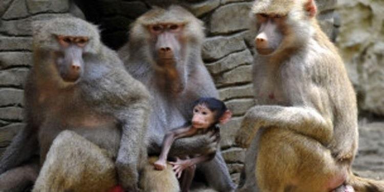 باريس: هروب عشرات القردة من حديقة حيوان
