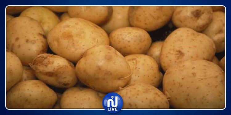 أريانة : حجز 10 أطنان من البطاطا المهربة