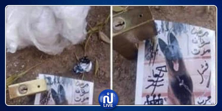 مصر: العثور على تعاويذ سحرية تستهدف حيوان أليف