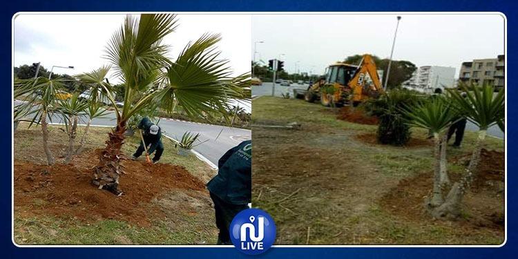 ما حقيقة إزالة الأشجار ونباتات الزينة بعد إنتهاء القمة العربية(صور)
