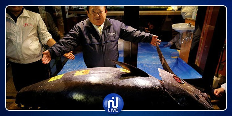 بيع سمكة تونة واحدة بـأكثر من 9 مليون دينار تونسي