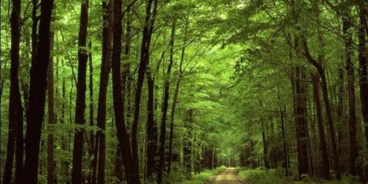 العيش في الغابات يجعلك أقل قلقا