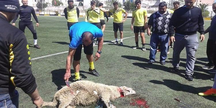 خلال الحصة التدريبية اليوم : جماهير النادي البنزرتي تذبح خروفا لطرد النحس عن الفريق ! (صور)