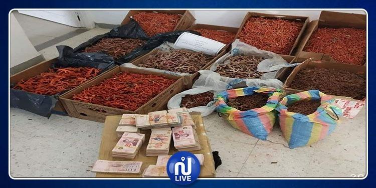 طبرقة: حجز كمية من المرجان بقيمة 500 ألف دينار وإيقاف كهل (صور)