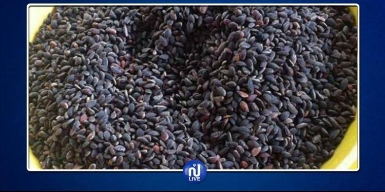 نابل: حجز 2800 كلغ من 'الزقوقو' مجهولة المصدر