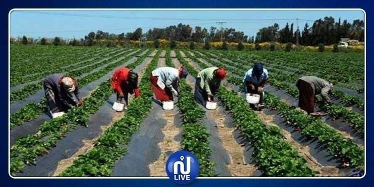 Bizerte : Hausse de 20% des investissements agricoles