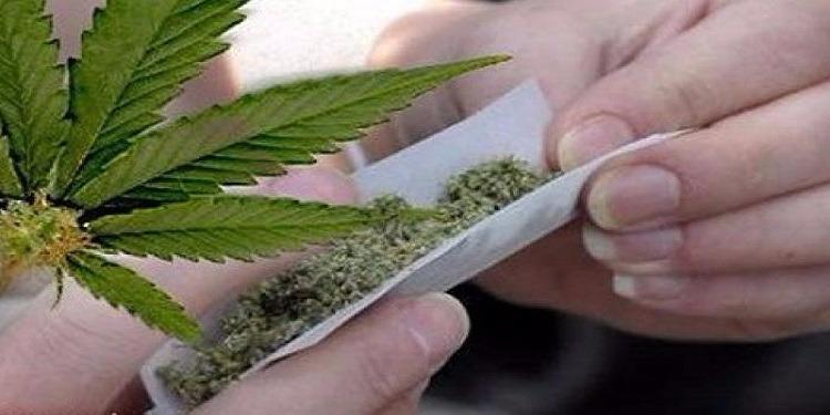 المهدية: إيقاف مواطن بالخارج زرع نبتة الماريجوانا في أرضه (صور)