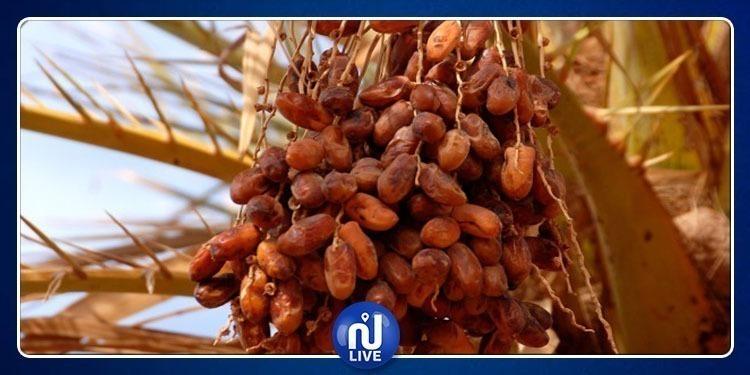 Ramadan: Les dattes emballées, entre 5800 et 7900 millimes