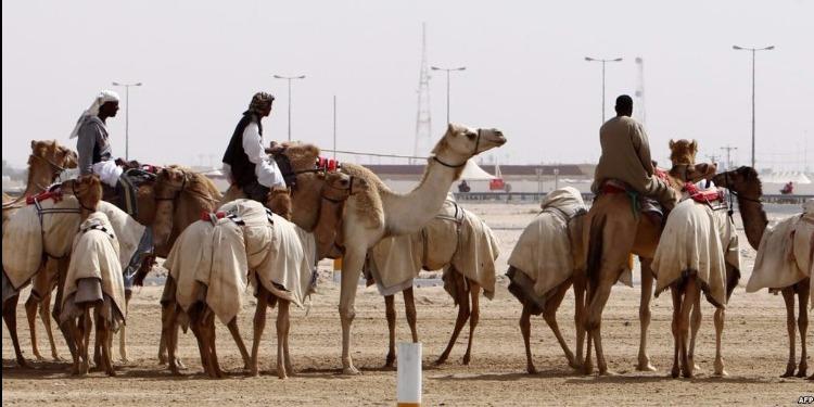 السعودية تطرد الإبل والأغنام القطرية