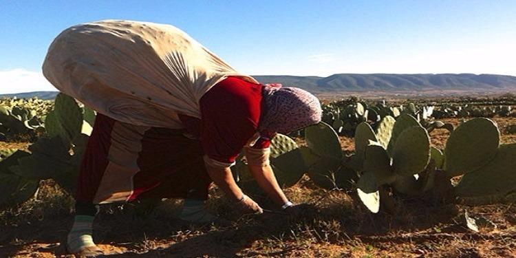 جندوبة: وفاة عاملة فلاحية بآلة دارسة للفول