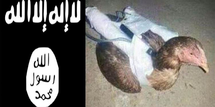 """""""الدجاج الانتحاري"""" آخر أسلحة داعش"""