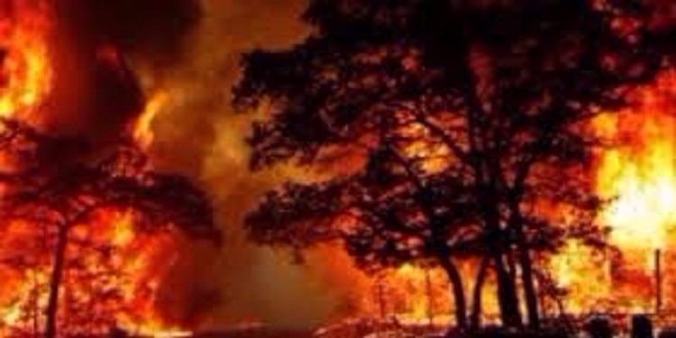 Incendie au Portugal : au moins 62 morts et 59 blessés