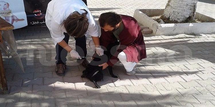 جندوبة: حملة لتلقيح الكلاب والقطط (صور)
