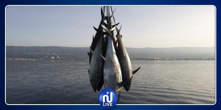 صفاقس: حجز 30 سمكة تن أحمر